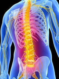 Chiropractic spine image